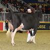Royal16_Holstein_1M9A0575