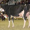 Royal16_Holstein_1M9A0456
