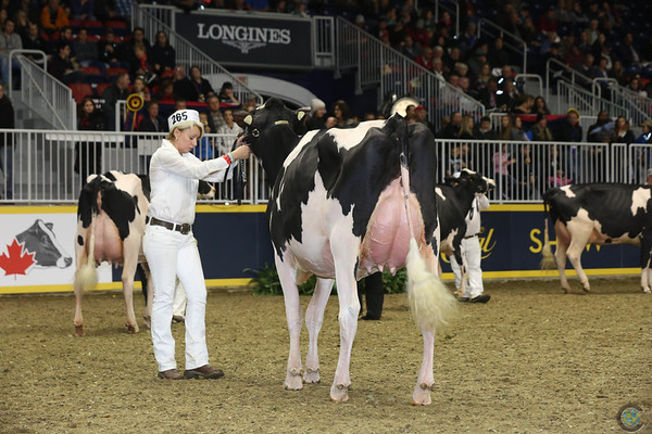 Royal16_Holstein_L32A4199