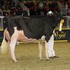 Royal16_Holstein_1M9A0578