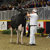 Royal16_Holstein_L32A4204