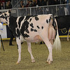 Royal16_Holstein_1M9A0553