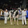 Royal16_Holstein_L32A4380