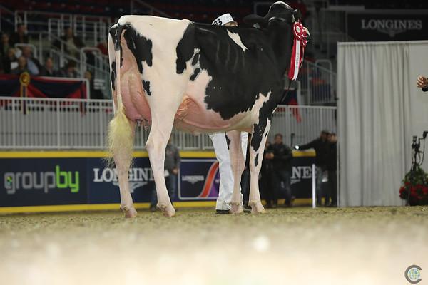 Royal16_Holstein_L32A4285