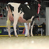 Royal16_Holstein_L32A4285