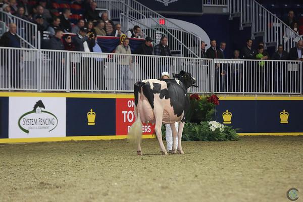 Royal16_Holstein_L32A4481