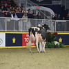 Royal16_Holstein_L32A4481
