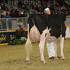 Royal16_Holstein_1M9A0746
