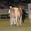 Royal16_Holstein_1M9A0571