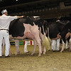 Royal16_Holstein_1M9A0664