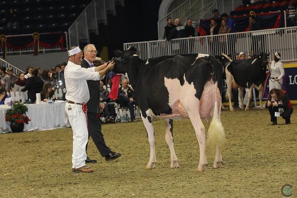 Royal16_Holstein_1M9A0725