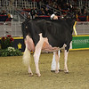Royal16_Holstein_1M9A0570