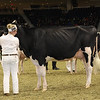 Royal16_Holstein_1M9A0699