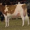 Royal16_Holstein_1M9A0562
