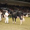 Royal16_Holstein_1M9A0647