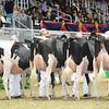 Royal16_Holstein_L32A4242