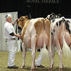 Royal16_Holstein_L32A4326