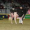 Royal16_Holstein_L32A4453