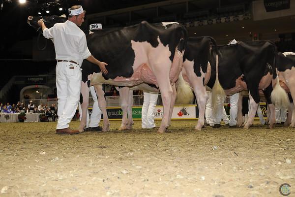 Royal16_Holstein_1M9A0658