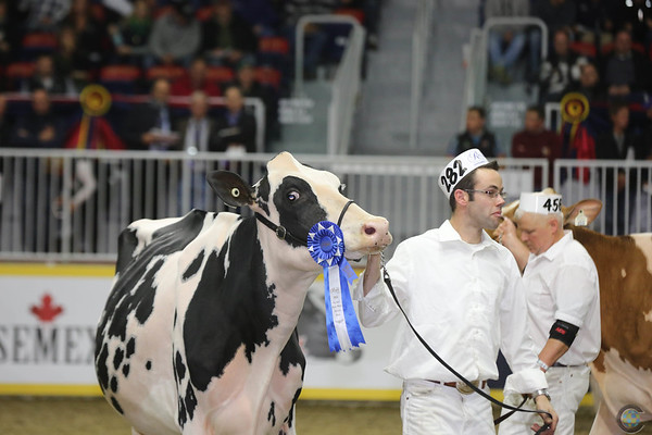 Royal16_Holstein_L32A4370