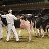 Royal16_Holstein_1M9A0656