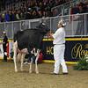 Royal16_Holstein_L32A4206