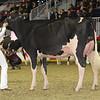 Royal16_Holstein_1M9A0455