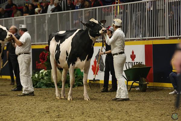 Royal16_Holstein_L32A4192