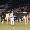 Royal16_Holstein_1M9A0447