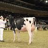 Royal16_Holstein_1M9A0385