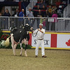 Royal16_Holstein_L32A4425