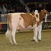 Royal16_Holstein_1M9A0581