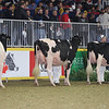 Royal16_Holstein_L32A4303