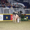 Royal16_Holstein_L32A4480
