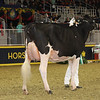 Royal16_Holstein_1M9A0465