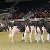 Royal16_Holstein_1M9A0708