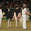Royal16_Holstein_1M9A0458