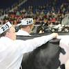 Royal16_Holstein_L32A4232