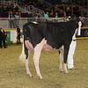 Royal16_Holstein_1M9A0463