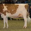 Royal16_Holstein_1M9A0556