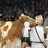 Royal16_Holstein_L32A4373