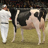 Royal16_Holstein_1M9A0768