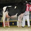 Royal16_Holstein_L32A4282