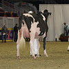 Royal16_Holstein_1M9A0467