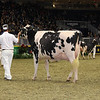 Royal16_Holstein_1M9A0702