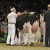 Royal16_Holstein_1M9A0512