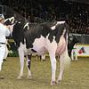 Royal16_Holstein_L32A4213