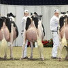 Royal16_Holstein_L32A4498