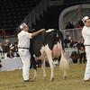 Royal16_Holstein_1M9A0563