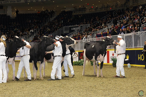 Royal16_Holstein_1M9A0684